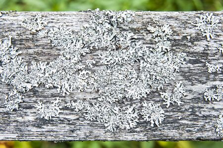 Closeup of lichens on the wooden railings