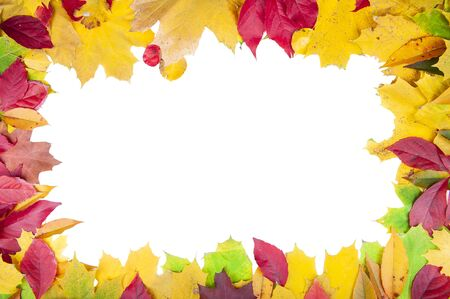 Orange, yellow and green autumn leaves isolated on white background
