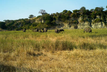 A Herd of African Elephants Archivio Fotografico