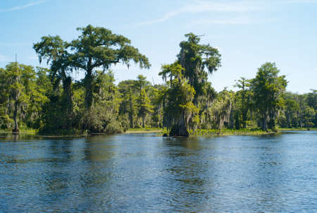 Mysterious Landscape with Trees, Spanish Moss and the Waters of Wakulla River at Wakulla Springs, Florida, United States