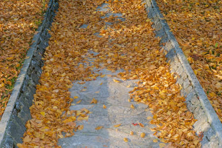 Fallen Golden and  Orange Leaves on a Cobblestone Path - An Autumn Background