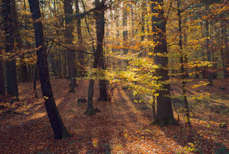 A Beautiful Autumn Scene in the Forest with Trees and Colorful Orange Leaves Stock Photo