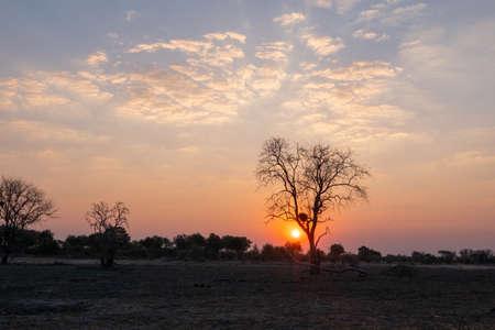 Sunset in African Savanna behind Tree, Okavango Delta, Botswana, with Dramatic Sky