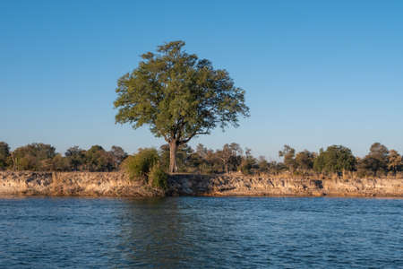 Landscape on the Bank of the River Okavango with Trees and Bushes in Namibia, Africa