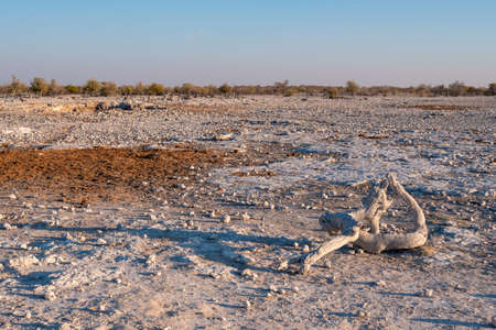 Rocky African Landscape with Bleached, White, Dried Wood in Etosha National Park, Namibia, Africa