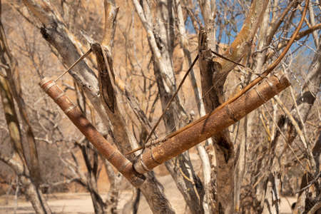 Bow and Quiver with Arrows of a San or Bushman Hunter Hanging on a Dry Bush, No People Zdjęcie Seryjne