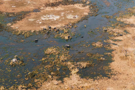 Okavango Delta Aerial with Elephant Herd Grazing in a Swamp or River Surrounded by Arid Land