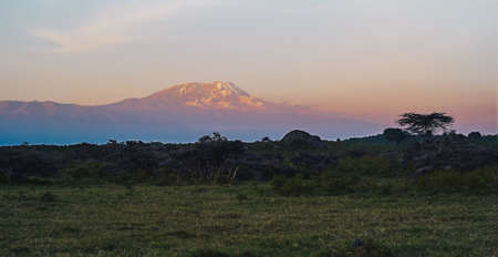 Mount Kilimanjaro at Dusk with Snow on the Summit seen from Arusha National Park, Tanzania, Africa