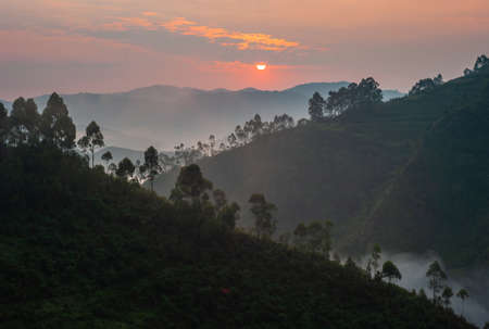 Sunrise in Bwindi Impenetrable Forest National Park, Uganda. Landscape at Dawn with Fog or Mist and Rainforest.
