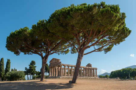 Ancient Greek Temple of Athena or Ceres in Paestum, Italy with Doric Columns and  Olve Trees