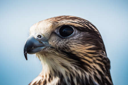 Common Buzzard Head Close-Up Portrait of the Head, an Intermediate Adult of the Species Buteo Buteo Reklamní fotografie