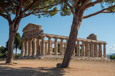 Temple of Athena in Paestum , Italy formerly known as Temple of Ceres with Doric Columns and Olive Trees