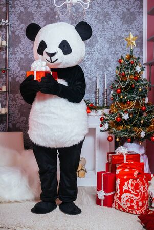 Preparing for Christmas. A man dressed as a panda in the interior of the Christmas room and holding a present 版權商用圖片