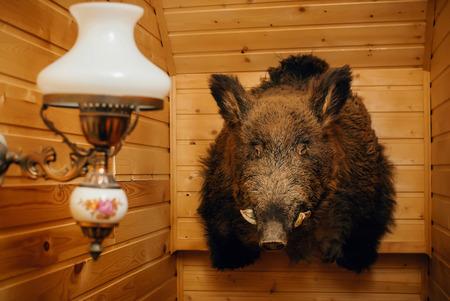 Wild boar head mounted on a wooden wall 版權商用圖片