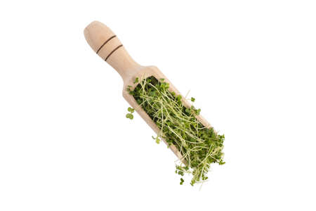 broccoli sprouts in wooden scoop isolated on white background. nutrition. bio. natural food ingredient.