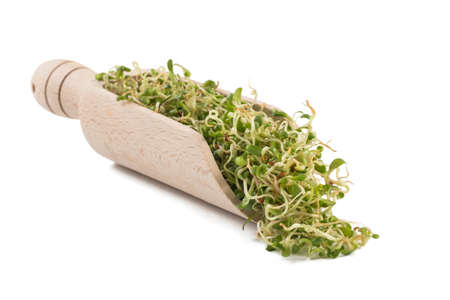 lucerne alfalfa sprouts in wooden scoop isolated on white background. nutrition. bio. natural food ingredient.