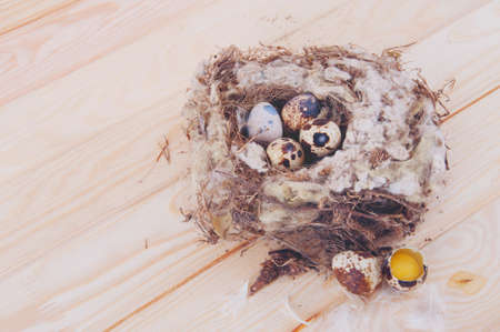 huevos de codorniz: huevos de codorniz en el nido en la mesa de madera