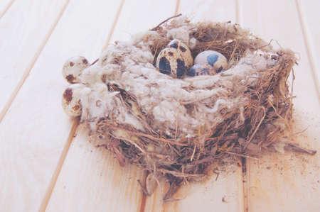 quail nest: Quail eggs in the nest on wooden table