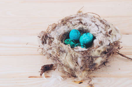 quail nest: Quail eggs in the nest on wooden table painter blue turquoise
