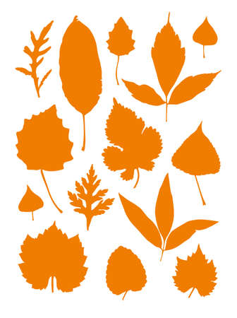 Autumn leaves. Set of vector silhouettes of various leaves trees. Flat design. Ilustración de vector