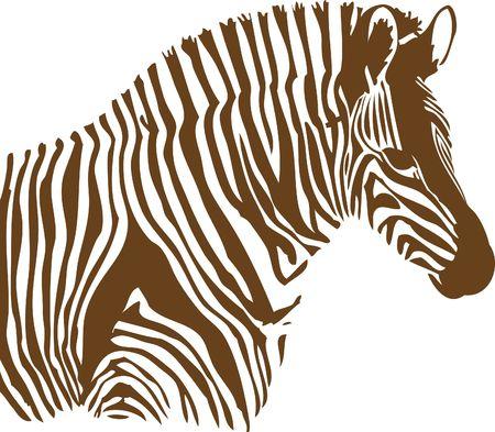 Brown and white Zebra on white background Stock Photo - 5525402
