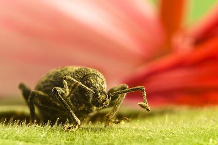 Close-up of beetle on leaf photo