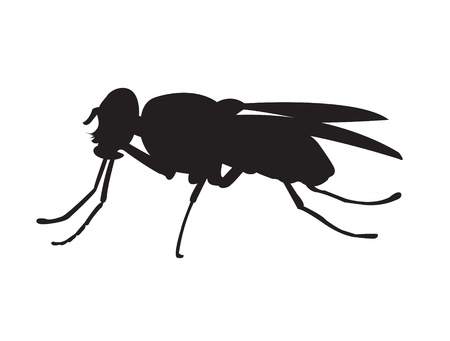 black house-fly drawing isolated on white