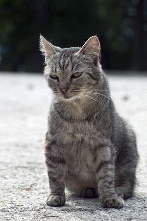 outdoor cat on the walk Stock Photo - 13456921