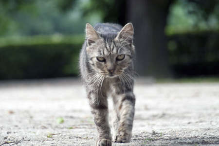 outdoor cat on the walk photo