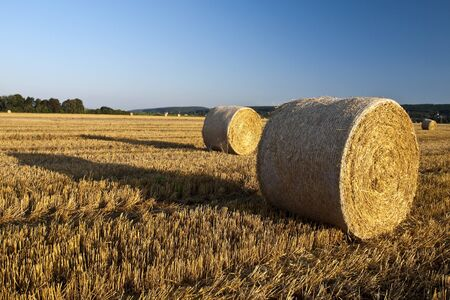 Harvested Roll of Straw and blue sky photo