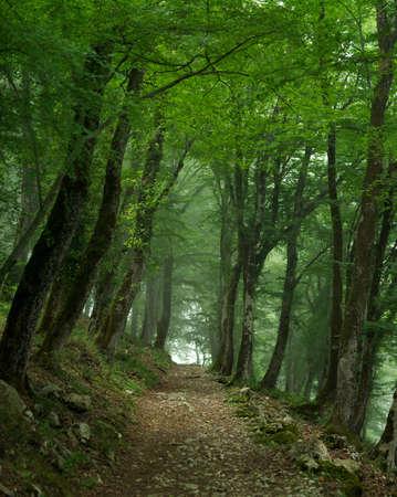 霧の中のパッチで緑の森 写真素材 - 51238404
