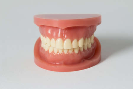 odontology: Set of false teeth on white showing the upper and lower jaw in a dental care, dentistry, odontology and medical concept