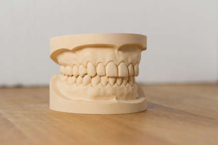 prosthetic equipment: Dental mold showing a full set of teeth on a wooden table viewed side-on in a dentistry, oral hygiene and healthcare concept
