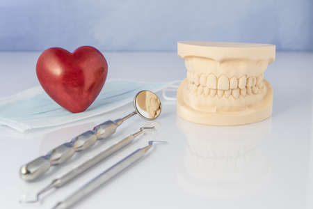 surrogate: Dental mold showing the teeth of the upper and lower jaw with dental tools and a face mask on a table in a dental care and examination concept. And a red heart.
