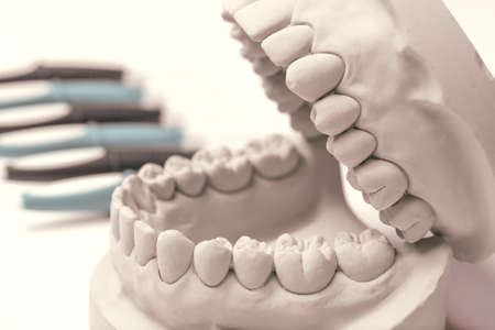 molars: Close up of gray clay human gums model with row of dentistry tools in background Stock Photo