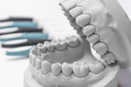 molares: Cierre up de color gris modelo enc�as humanas de barro con la fila de herramientas de odontolog�a en segundo plano