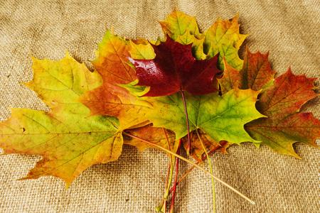 javorové listy podzimní barvy
