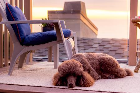 Dog sleeping on a balcony - Stock Photo 写真素材