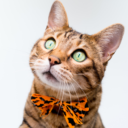 Halloween cat on white background 写真素材