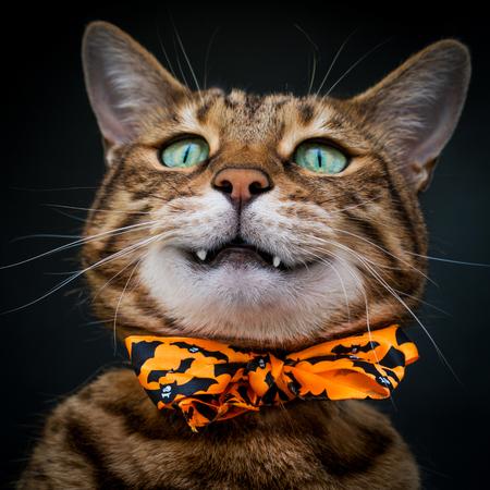 Halloween cat on black background 写真素材