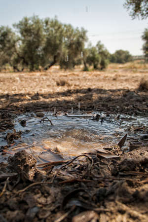 Drip irrigation in a field of olive trees, Jaen, Andalusia, Spain photo