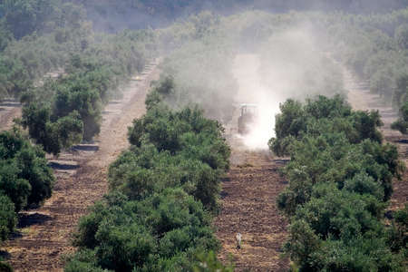 Tractor doing work in a plantation of olive trees near Jaen, Andalusia, Spain photo