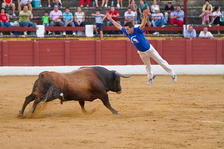Spanish recortador performed with expertise pirouettes before the onslaught of the brave bull or heifer as are cuts, jumping over or side antitheses in accordance to the waist of the phytons bulls Editorial