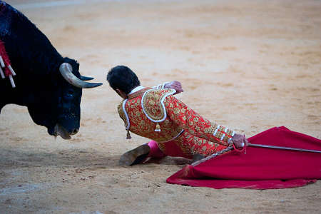 el fandi: the Spanish toreador The Fandi of knees very close between the horns of the bull, Spain