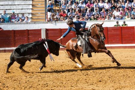 braveness: Pozoblanco, Corodoba province, SPAIN- 25 september 2011  Spanish bullfighter on horseback Pablo Hermoso de Mendoza bullfighting on horseback playing the head of the bull with his hand in Pozoblanco, Cordoba province, Andalusia, Spain