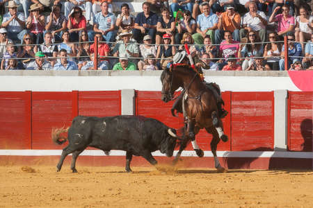 braveness: Pozoblanco, Cordoba province, SPAIN- 25 september 2011  Spanish bullfighter on horseback Diego Ventura bullfighting on horseback, bull chases the horse riding laterally to the edge of the burladero, the public is surprised by the maneuver of the bullfight Editorial