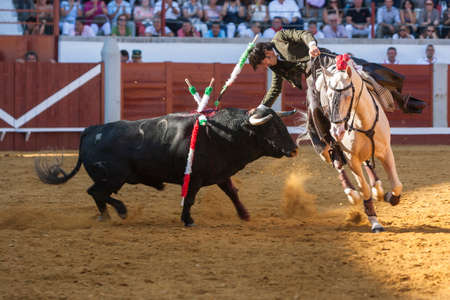 Pozoblanco, Cordoba province, SPAIN- 25 september 2011  Spanish bullfighter on horseback Diego Ventura bullfighting on horseback playing the head of the bull with his hand in Pozoblanco, Cordoba province, Andalusia, Spain