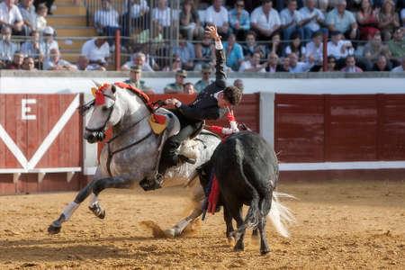 braveness: Pozoblanco, Cordoba province, SPAIN - 14 august 2011  Spanish bullfighter on horseback Leonardo Hernandez putting the bull banderillas in Pozoblanco, Cordoba province, Andalusia, Spain