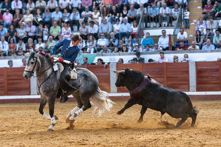 Pozoblanco, Cordoba province, SPAIN- 25 september 2011  Spanish bullfighter on horseback Pablo Hermoso de Mendoza bullfighting on horseback, brave bull tries to catch the horse jumping, but the horse makes a wheelie and escape in Pozoblanco, Cordoba provi