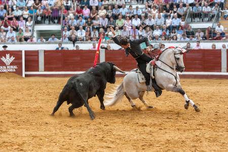 braveness: Pozoblanco, Cordoba province, SPAIN- 25 september 2011: Spanish bullfighter on horseback Leonardo Hernandez bullfighting on horseback, nailing flags the Act of bravery and risky position Bull in Pozoblanco, Cordoba province, Andalusia, Spain